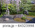 妙心寺 退蔵院 桜 64323998