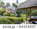 妙心寺 退蔵院 桜 64324007