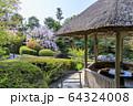妙心寺 退蔵院 桜 64324008