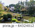 妙心寺 退蔵院 桜 64324012