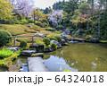 妙心寺 退蔵院 桜 64324018