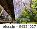 妙心寺 退蔵院 桜 64324027