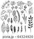 plant_set 64324920