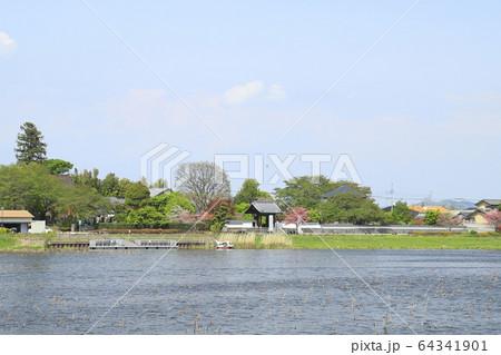 館林市つつじが岡公園から見る城沼と善長寺 64341901
