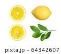 素材-レモン 64342607