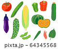 夏野菜のセット 64345568