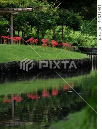 小石川後楽園の曼珠沙華と池のリフレクション 9月 64381491