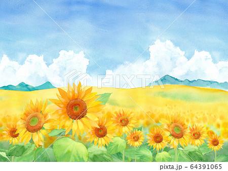 山と入道雲のひまわり畑の風景、水彩イラスト 64391065