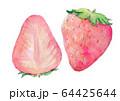 水彩イラスト 食品 食べ物 いちご 64425644