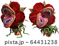 Carnivorous plant about to attack 3D illustration 64431238