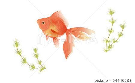 金魚と水草 64446533