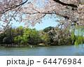 石神井公園の春 64476984