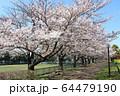 井草森公園 64479190