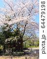 井草森公園入口 64479198