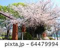 井草森公園入口 64479994