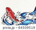 鯉の滝登り-錦鯉-水飛沫-水-躍動感 64509519