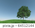 丘に立つトチノキ 64512144