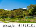 東京都 新緑の高尾山 64515151