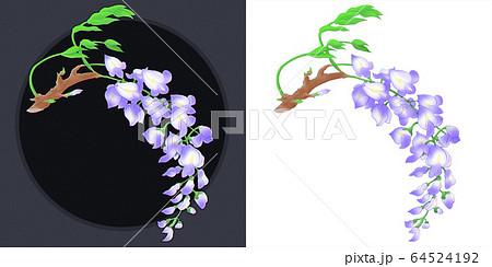 藤の花(一房) 64524192