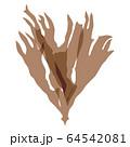 海藻 紅藻類 ベクター素材  カバノリ 64542081
