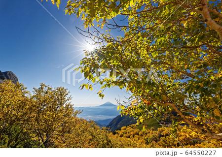 南アルプス・鳳凰三山・薬師岳のダケカンバの黄葉と富士山の眺め 64550227