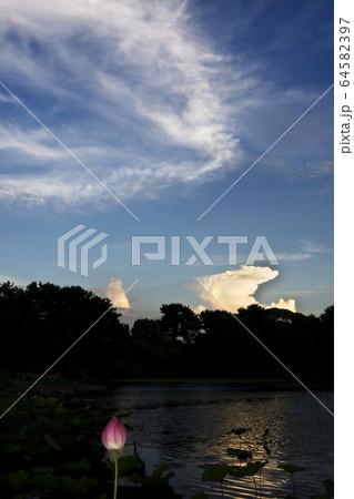 残暑の池畔・夕刻の蓮池から望む夏雲と秋を感じる雲の晩秋風景 64582397