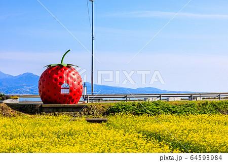 フルーツバス停:イチゴと菜の花 【長崎県諫早市小長井町】 64593984