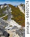 鳳凰三山・観音岳稜線から見る地蔵岳とダケカンバの黄葉 64607174