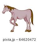 乗馬の手描き風イラスト 鞍なし 64620472