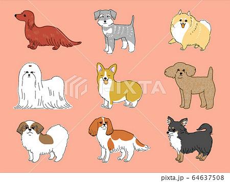 小型犬 64637508