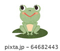 カエル 64682443