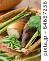 ザルに盛られた春野菜 64687236