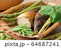 ザルに盛られた春野菜 64687241