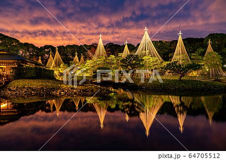 愛知県 名古屋市 白鳥庭園の雪吊り 夕景 紅葉のライトアップ 64705512