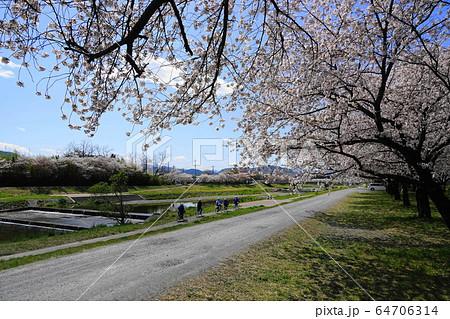 4月 本庄111こだま千本桜・小山川と桜並木 64706314