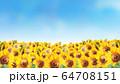 ヒマワリ畑水彩画 64708151