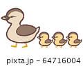 カルガモ親子1 64716004