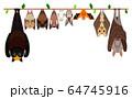 一列に並んでぶら下がったいろいろな種類のコウモリたち 64745916
