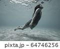 水中の女性 64746256