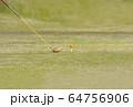 ドライバーショット ティーショット ゴルフ場 ティーグラウンド ゴルフイメージ  64756906