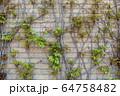阪神甲子園球場 64758482