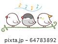 歌う鳥たち 64783892