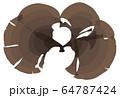海藻  褐藻類 ベクター素材 ウミウチワ 64787424