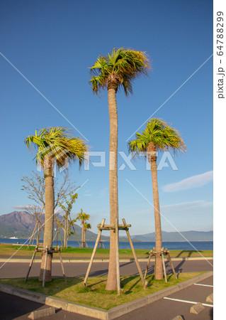 マリンポート鹿児島からの風景 桜島 64788299