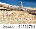 青い海とヤドカリと 沖縄の風景 64791734