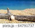 青い海とヤドカリと 沖縄の風景 64791737