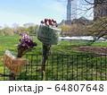 COVID-19 NYC セントラルパーク仮設病院 64807648