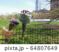 COVID-19 NYC セントラルパーク仮設病院 64807649