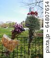 COVID-19 NYC セントラルパーク仮設病院 64807654
