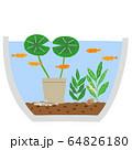 睡蓮鉢 ビオトープ 64826180